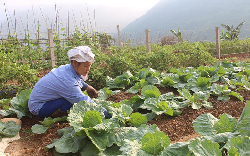 Cách tính giá đền bù đất nông nghiệp mới nhất